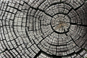 """Cracked Tree Stump"" by Darren Hester / by CC 2.0"